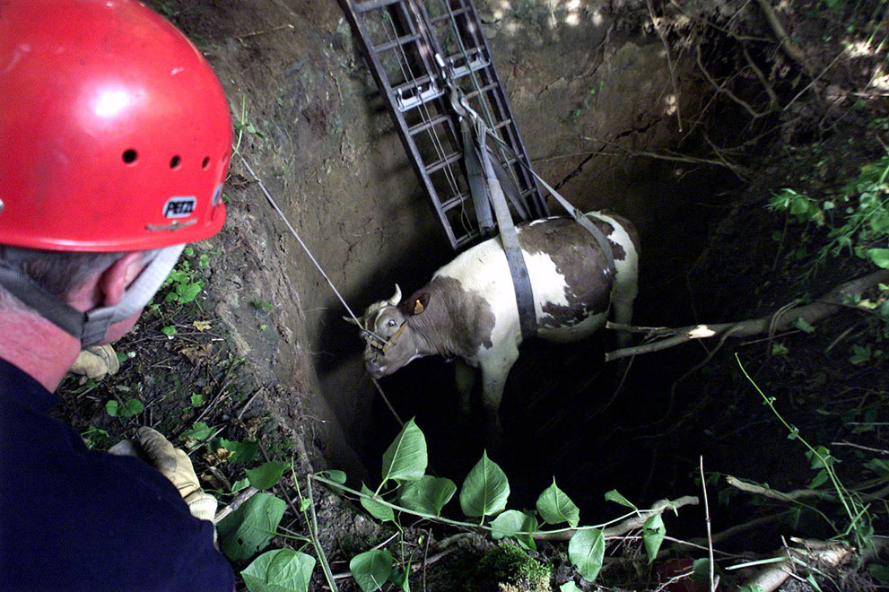 11 A fireman watches a cow being lifted out of a five meter deep hole at Saint Saulve near Valenciennes, northern France, on June 19, 2001. The ground collapsed as two cows crossed over an underground quarry. The cows were unhurt.